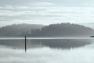 November Light. Morning haze.
