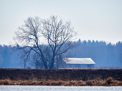 The tree the barn and the black field