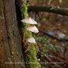 Lahottajasieniä - Molder Mushrooms