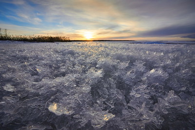 Ice Roses