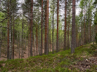 Ancient fortress of Rapolanharju  1. The hidden valley