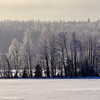 Cold morning on the lake