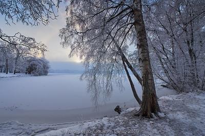Arboretum winter