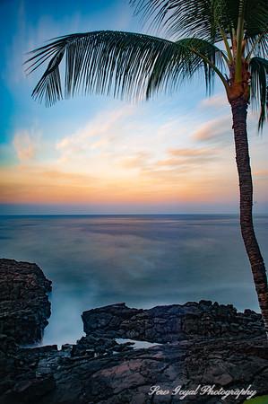 Lava Palm