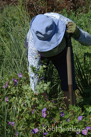 Woman gardener.  License this photo on Getty Images  © Rob Huntley