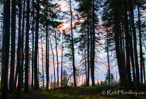 Tree Silhouettes at Hemlock Ravine Park, Halifax, NS.  © Rob Huntley