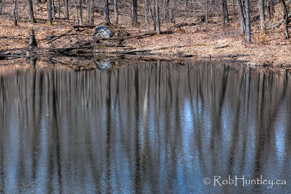 Springtime Beaver Pond Reflections  © Rob Huntley
