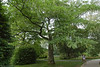 Botanical Garden in Montreal. Jardin Botanique a Montreal.