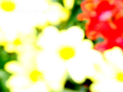 Blurred Flowers 2