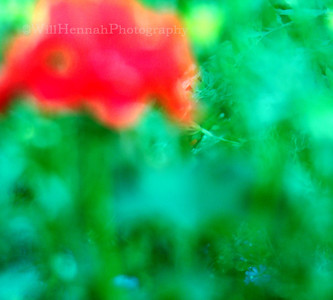 Blurred Flowers 1