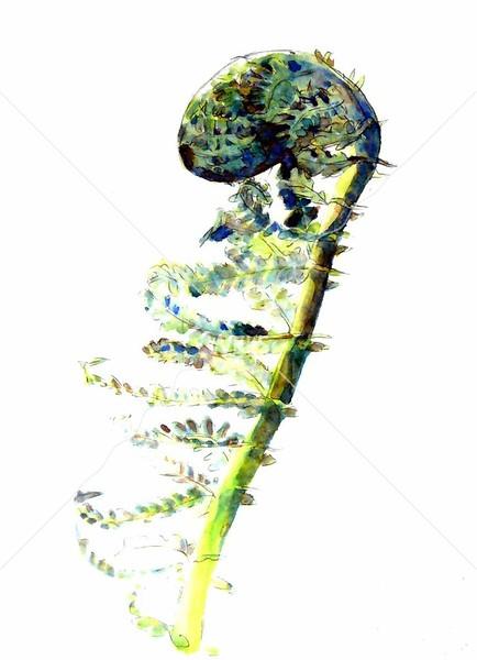 Fiddlehead by jjaspersen