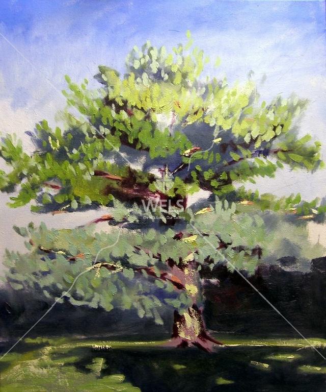 Tree 3 by jjaspersen