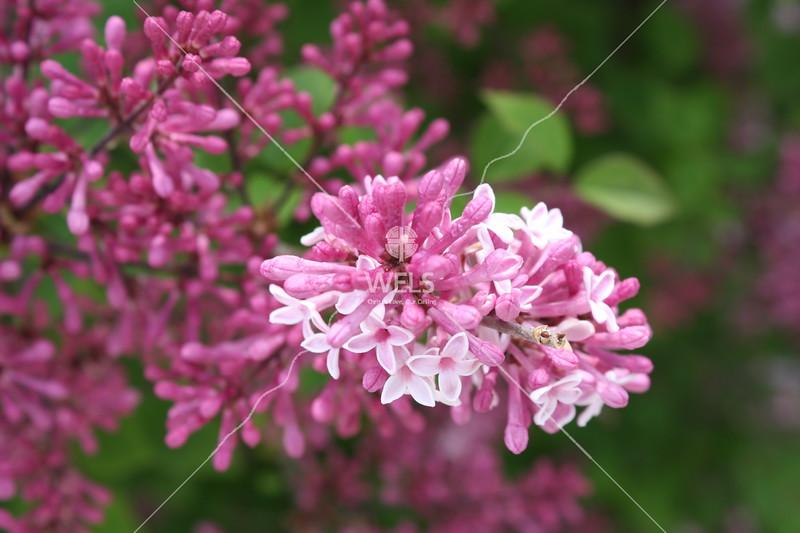Fragrance of Spring by kgoetzinger