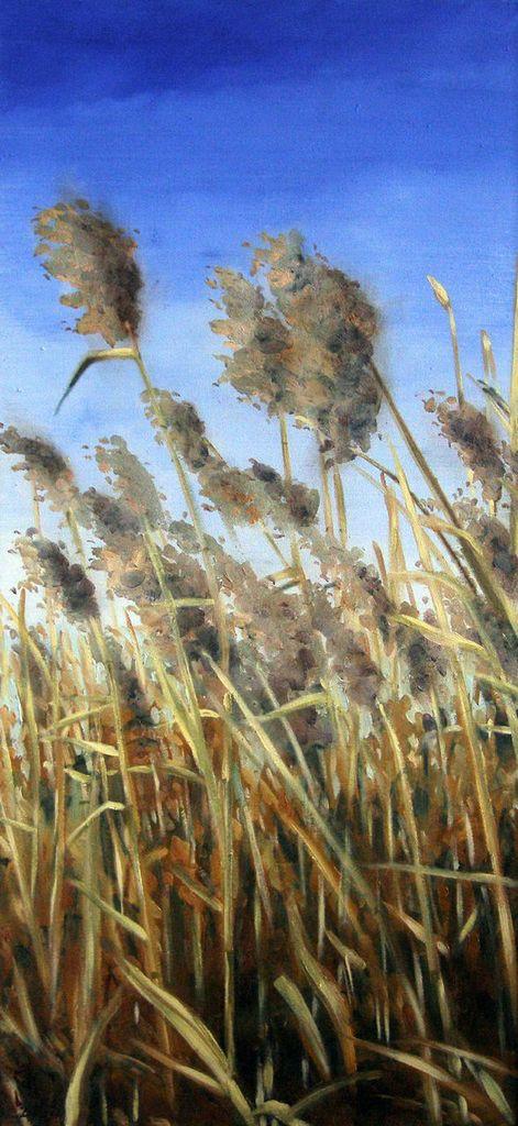 Tall Grass by jjaspersen