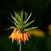"""Flower. <a href=""""http://www.wereldtuinenmondoverde.nl/index.php?id=18"""">Mondo Verde</a>, Landgraaf, Netherlands."""