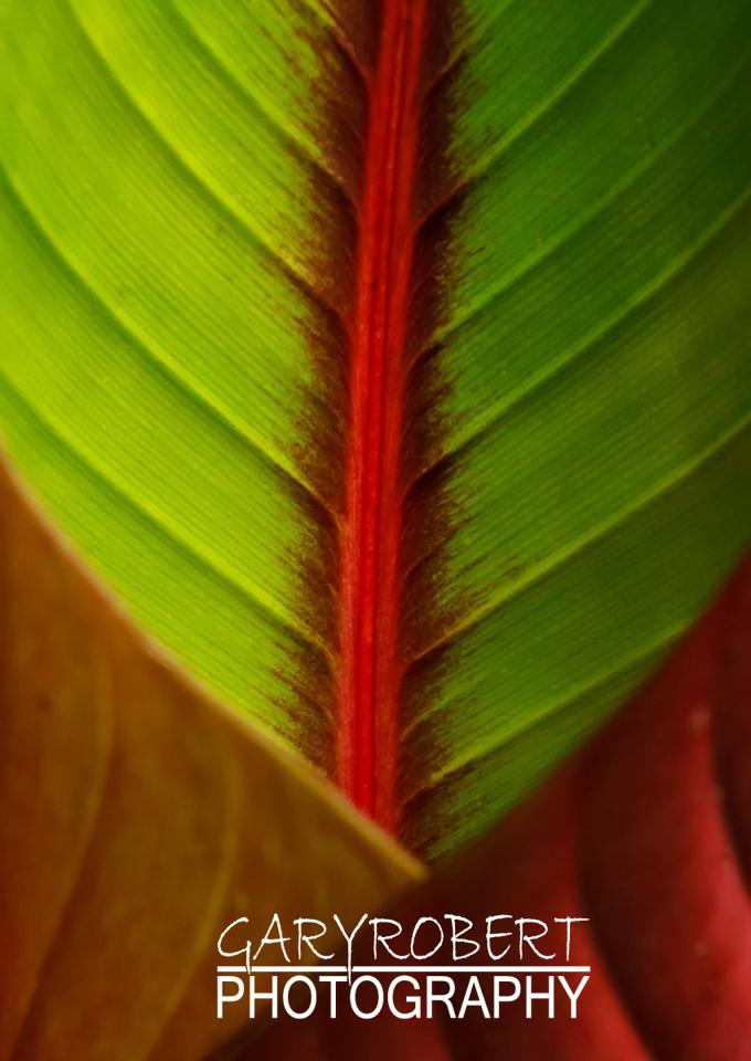 Costa Rica-1422