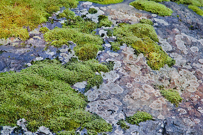 Moss and Lichen Intertwined, 44