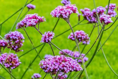 Flowers of Dromoland Castle