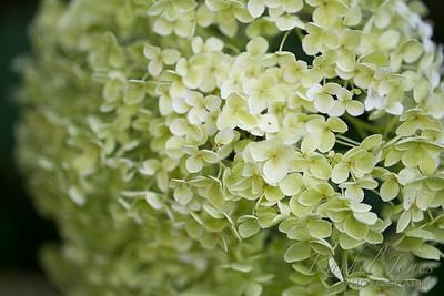 plants-07