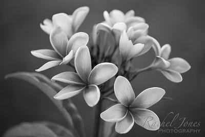 plants-02AB