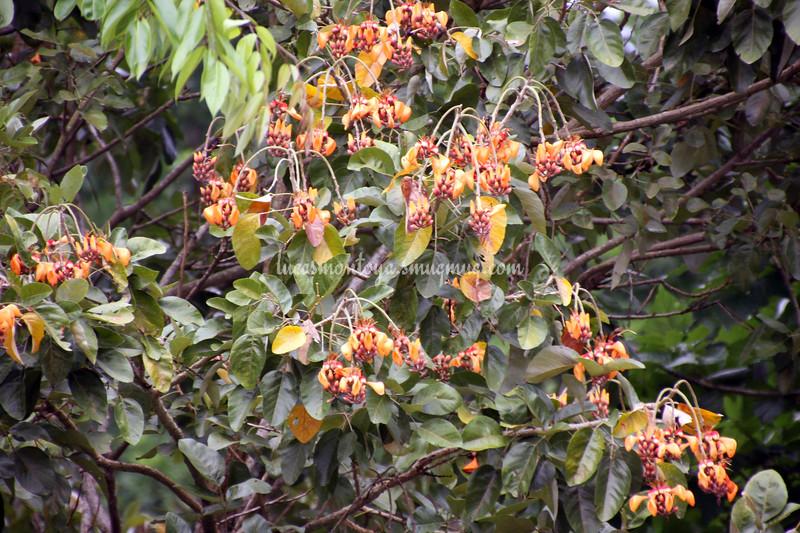 Costa Rica - December 2013
