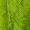 <strong><Center>Green