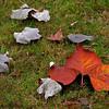 <strong><Center>Autumn