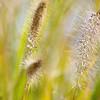 Grasses.