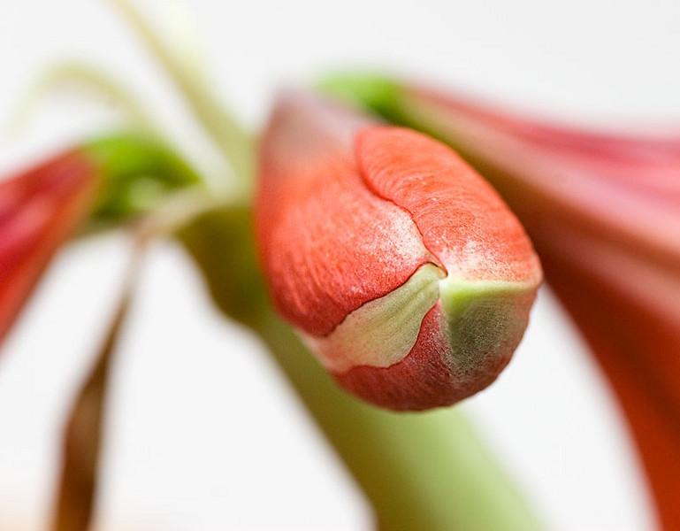 Closed blossom