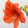 One blossom
