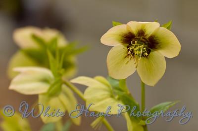 Spring at Washington Park Arboretum