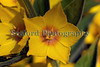 flower sealord garden Guernsey 140609 ©RLLord 5155 smg