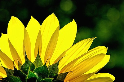 Herbaceous Plants, Flowers, Fruits