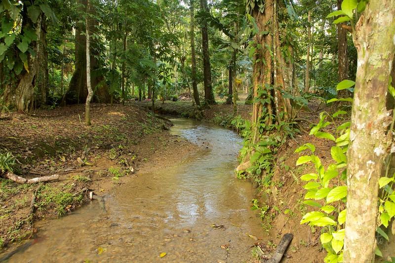 Jungle creek
