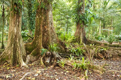 Bromeliads on roots of trees