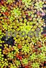 IMG_6829 Mosaic Plant VT 18 300 V2