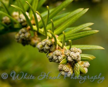 Signs of spring, at University of Washington Arboretum
