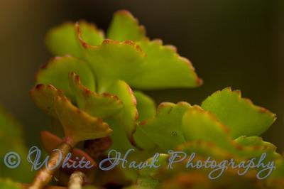 Close up of cactus plant