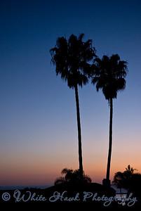 Palm trees, Capistrano Beach, CA