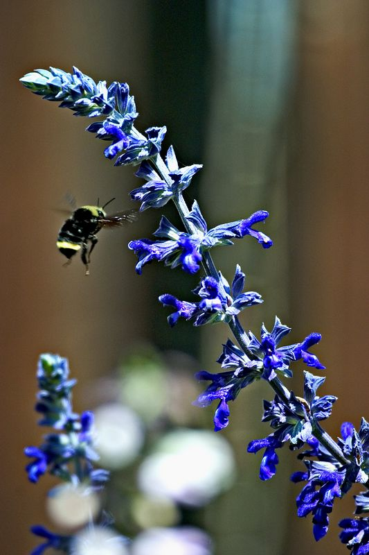 Flower-Bee-Bokeh-4