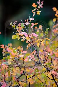 Hawthorn shrub (perhaps)