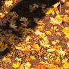 Falling_Leaf-162