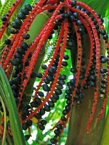 HI 2011 Maui 236