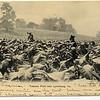 Postcard of a Tobacco Field near Lynchburg (03247)