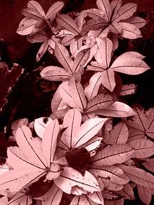 CO 2008 0530 DBG (40) tint