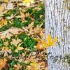 Falling_Leaf-150