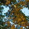 Falling_Leaf-136
