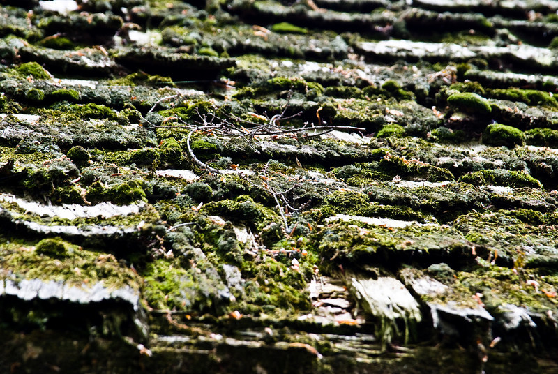 Moss on wood shingle shed roof.