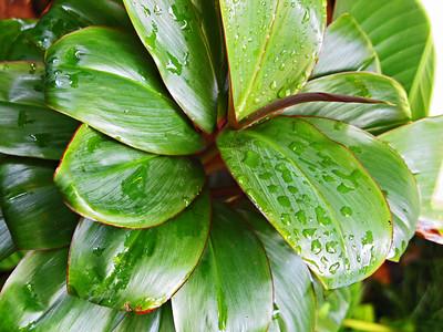 HI 2011 Maui 37jpg