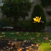 Falling_Leaf-128